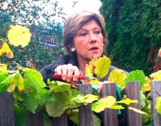 """Oktober 2016 – Dreharbeiten für die """"Vorstadtweiber"""""""